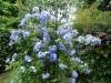 Nel mio giardino policromia di colori