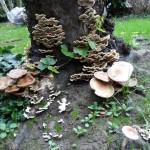 funghi-005